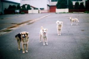 dogssochi