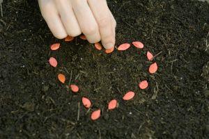 Hand arranging seeds in heart shape on soil