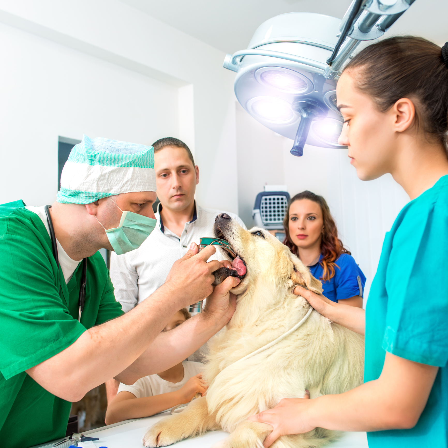 Vets examining Golden Retriever
