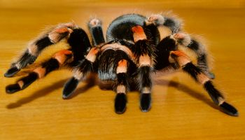 ZSL Whipsnade Zoo grants spider-boy his Halloween wish