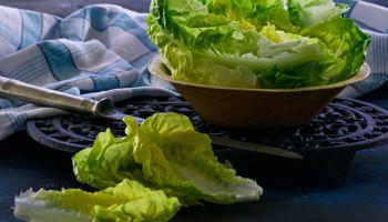 Romane lettuce leaves