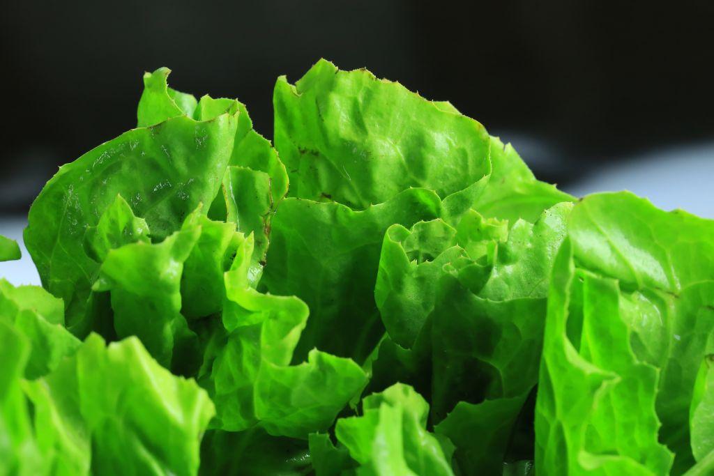 Lettuce leaf on a black background