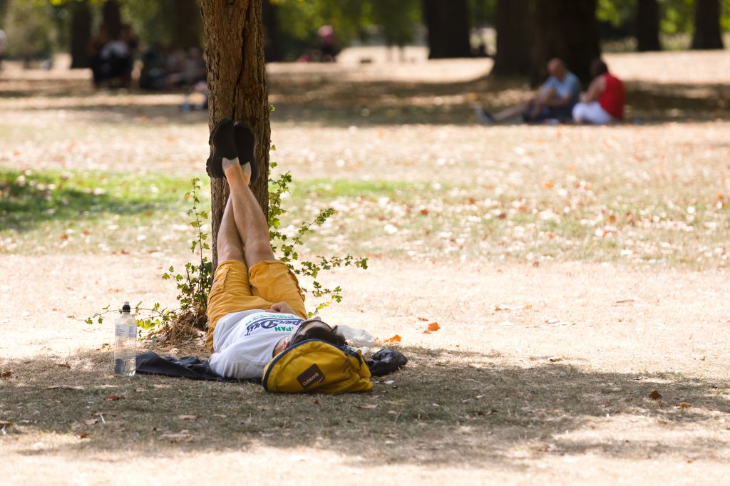 Man Lying On Grass With Feet Resting On A Tree