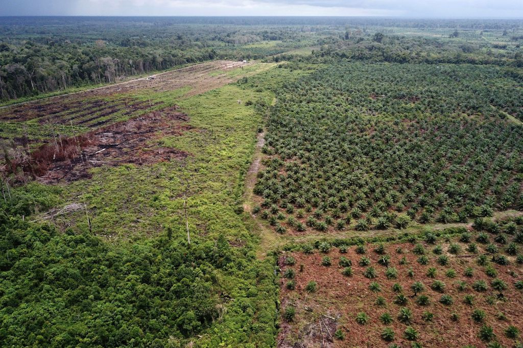 INDONESIA-ENVIRONMENT-FOREST-PALM-OIL