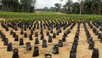 GABON-SINGAPORE-ECONOMY-AGRICULTURE