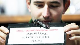 Zookeepers conduct the annual stocktake at ZSL Whipsnade Zoo
